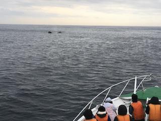 1-1 10月17日 学生たちの前に現れたザトウクジラ 撮影:西澤敏.JPG