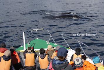 a2016.10.23 釧路市民の前に現れたザトウクジラたち.JPG