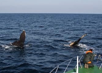3-1 2頭のザトウクジラをターゲットに水中カメラをおろす 撮影:笹森琴絵.JPG